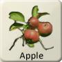 Celtic Druid Tree - Apple