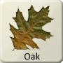 Celtic Druid Tree - Oak