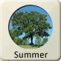 Astrology Season - Summer