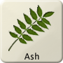 Celtic Tree - Ash