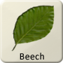 Celtic Tree - Beech