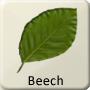 Celtic Tree - Beech