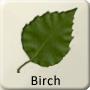 Celtic Tree - Birch