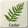 Celtic Tree - Cedar