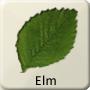 Celtic Tree - Elm