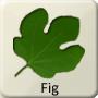 Celtic Tree - Fig