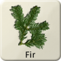 Celtic Tree - Fir