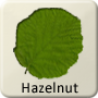 Celtic Tree - Hazelnut
