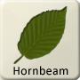 Celtic Tree - Hornbeam