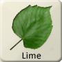 Celtic Tree - Lime