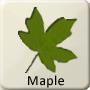 Celtic Tree - Maple