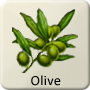 Celtic Tree - Olive