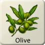 Celtic Tree - Olive