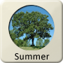 Season - Summer
