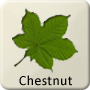 Celtic Tree - Chestnut