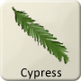 Celtic Tree - Cypress
