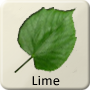Celtic Tree - Lime