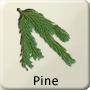 Celtic Druid Tree - Pine